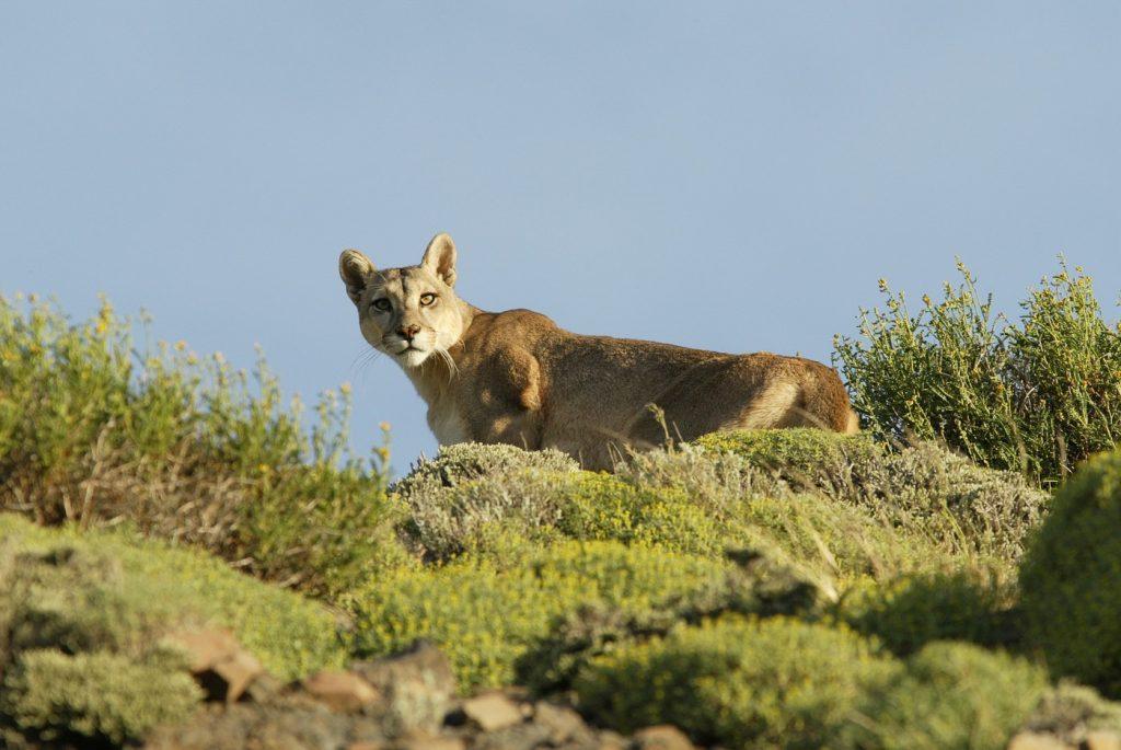 Fauna y Flora de Torres del Paine » TorresDelPaine