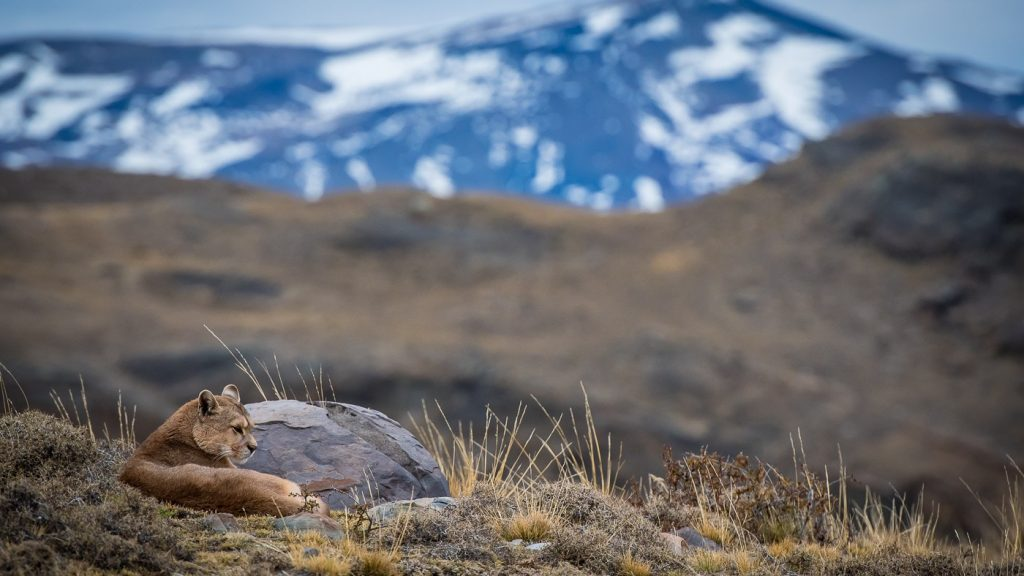 Fauna and Flora of Torres del Paine » TorresDelPaine